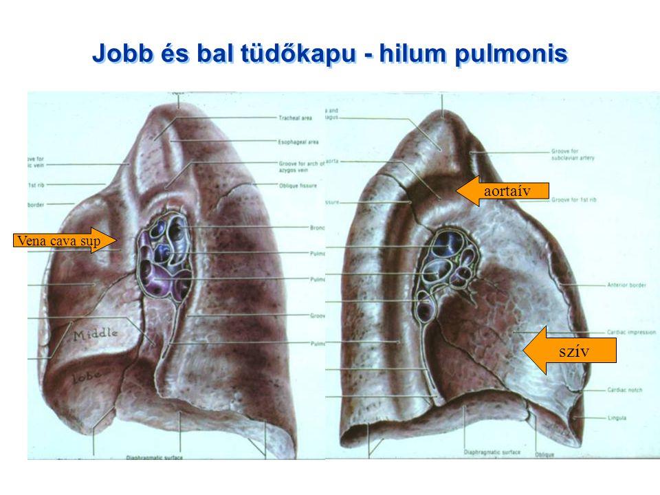 Jobb és bal tüdőkapu - hilum pulmonis aortaív Vena cava sup szív