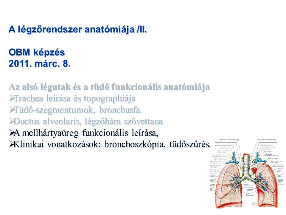 A légzőrendszer anatómiája /II. OBM képzés 2011. márc. 8. Az alsó légutak és a tüdő funkcionális anatómiája  Trachea leírása és topographiája  Tüdő-