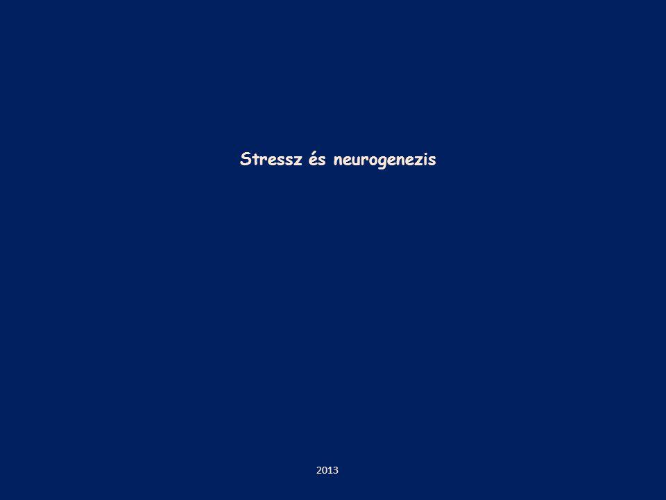 Stressz és neurogenezis 2013