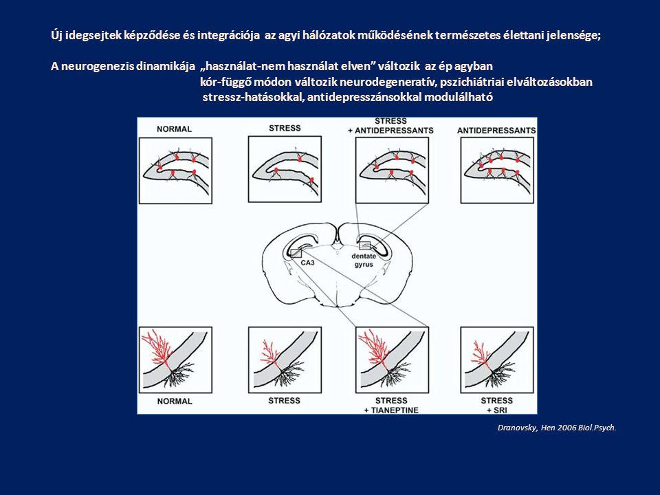 Dranovsky, Hen 2006 Biol.Psych. Új idegsejtek képződése és integrációja az agyi hálózatok működésének természetes élettani jelensége; A neurogenezis d