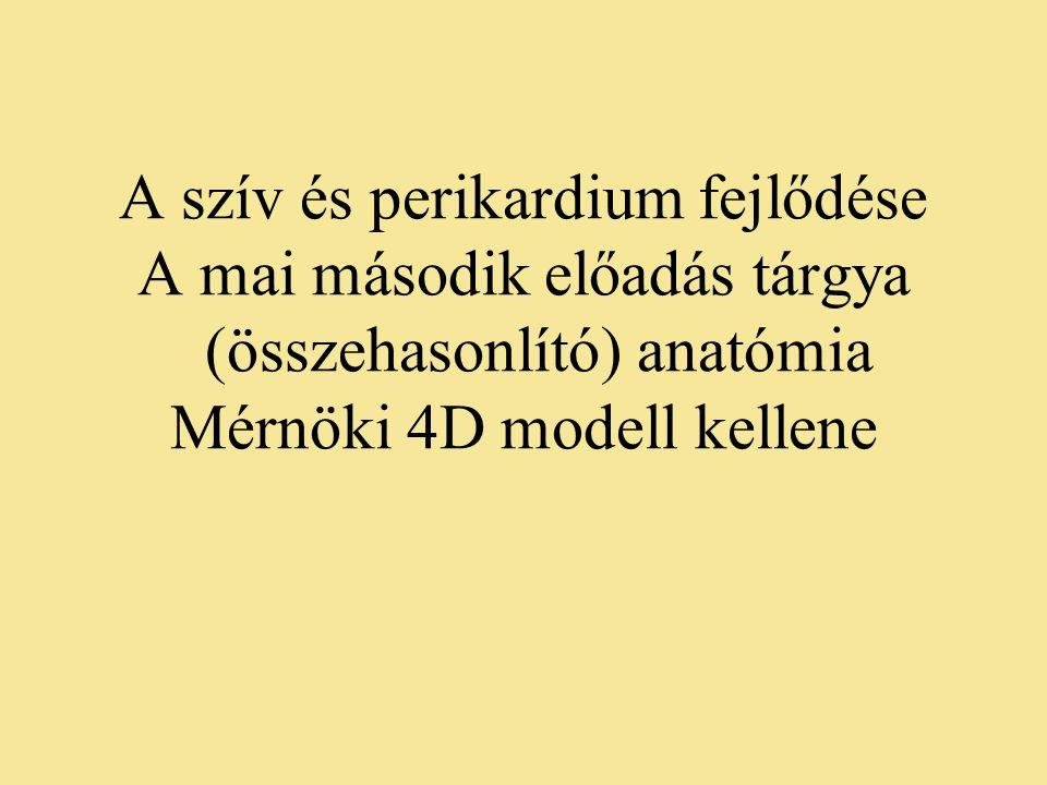 A szív és perikardium fejlődése A mai második előadás tárgya (összehasonlító) anatómia Mérnöki 4D modell kellene
