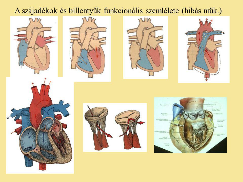 A szájadékok és billentyűk funkcionális szemlélete (hibás műk.)