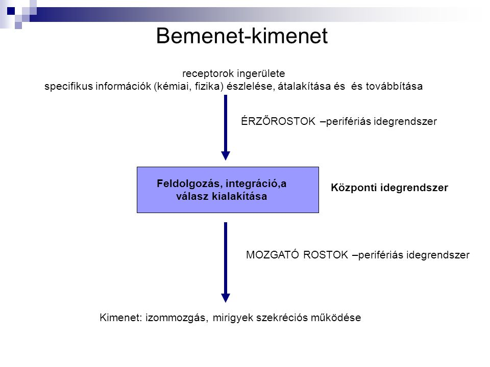 Bemenet-kimenet receptorok ingerülete specifikus információk (kémiai, fizika) észlelése, átalakítása és és továbbítása Feldolgozás, integráció,a válas