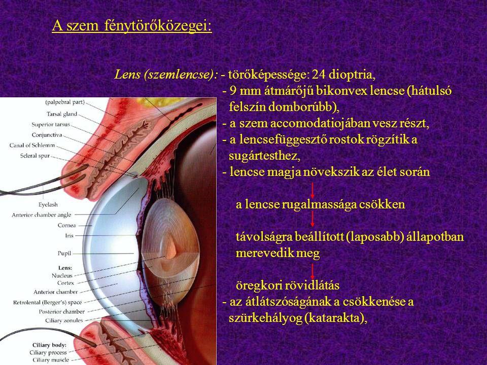 Lens (szemlencse): - törőképessége: 24 dioptria, - 9 mm átmárőjű bikonvex lencse (hátulsó felszín domborúbb), - a szem accomodatiojában vesz részt, -