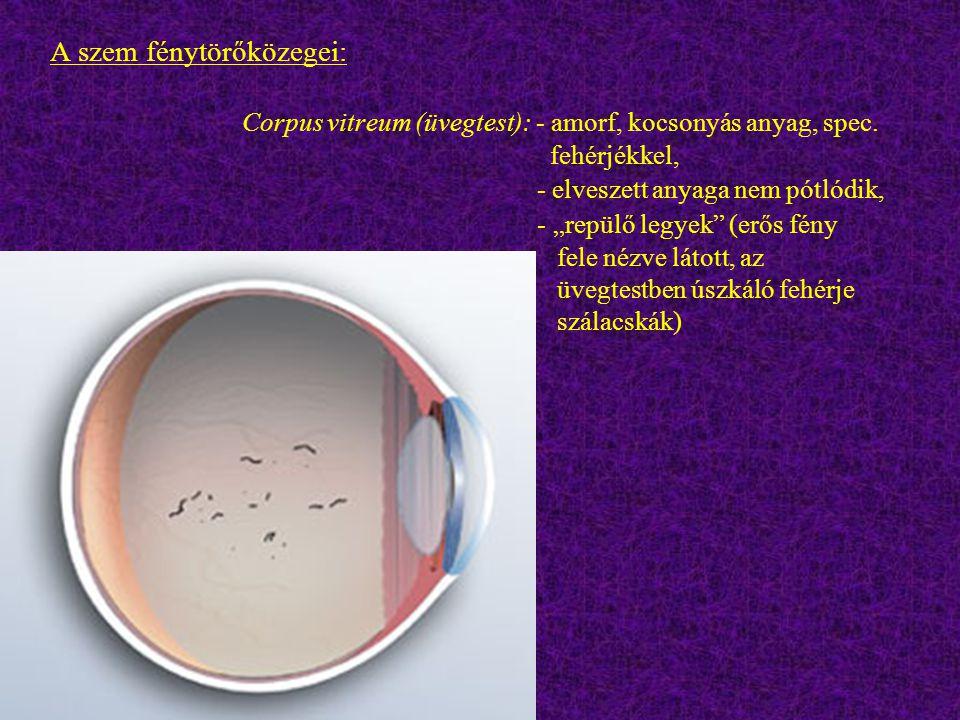 """A szem fénytörőközegei: Corpus vitreum (üvegtest): - amorf, kocsonyás anyag, spec. fehérjékkel, - elveszett anyaga nem pótlódik, - """"repülő legyek"""" (er"""