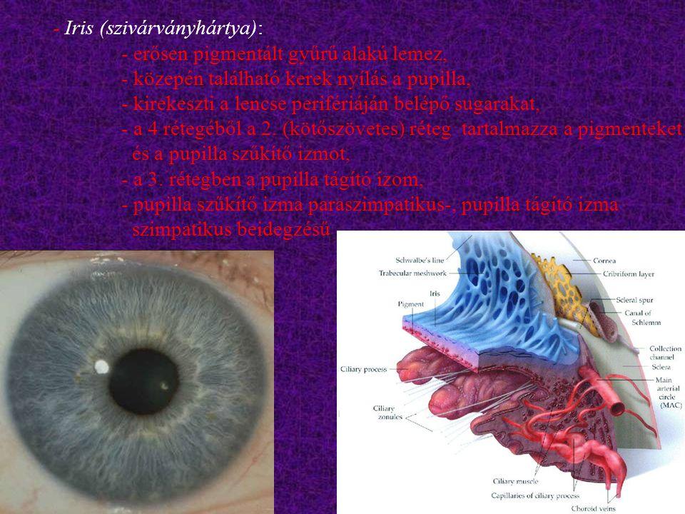- Iris (szivárványhártya): - erősen pigmentált gyűrű alakú lemez, - közepén található kerek nyílás a pupilla, - kirekeszti a lencse perifériáján belép