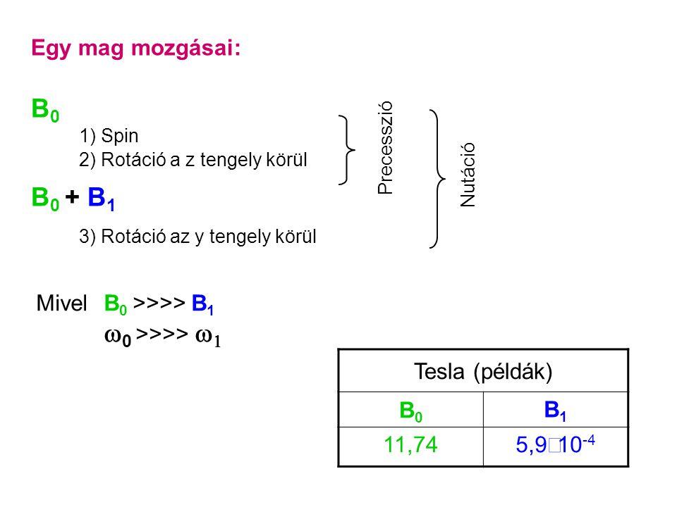Egy mag mozgásai: B0B0 1) Spin 2) Rotáció a z tengely körül B 0 + B 1 3) Rotáció az y tengely körül Precesszió Nutáció Mivel B 0 >>>> B 1  0 >>>>   Tesla (példák) B0B0 B1B1 11,74 5,9  10 -4