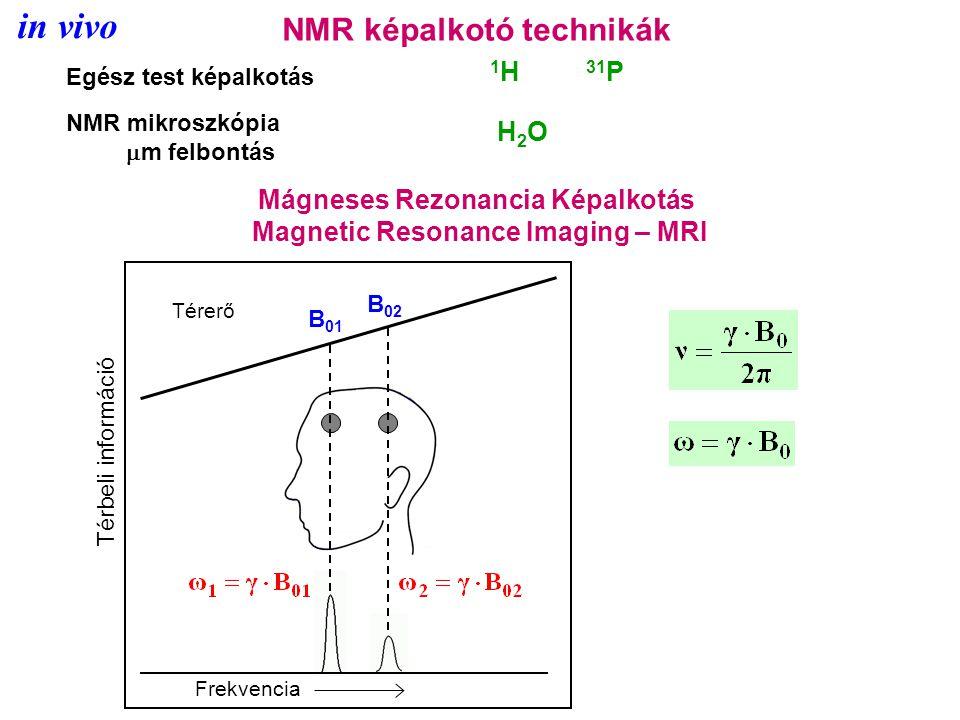NMR képalkotó technikák Egész test képalkotás NMR mikroszkópia  m felbontás 1 H 31 P H2OH2O Mágneses Rezonancia Képalkotás Magnetic Resonance Imaging – MRI Térbeli információ Frekvencia Térerő B 01 B 02 in vivo