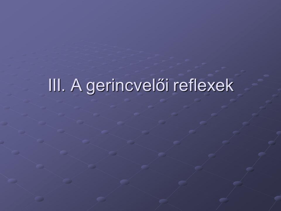 III. A gerincvelői reflexek