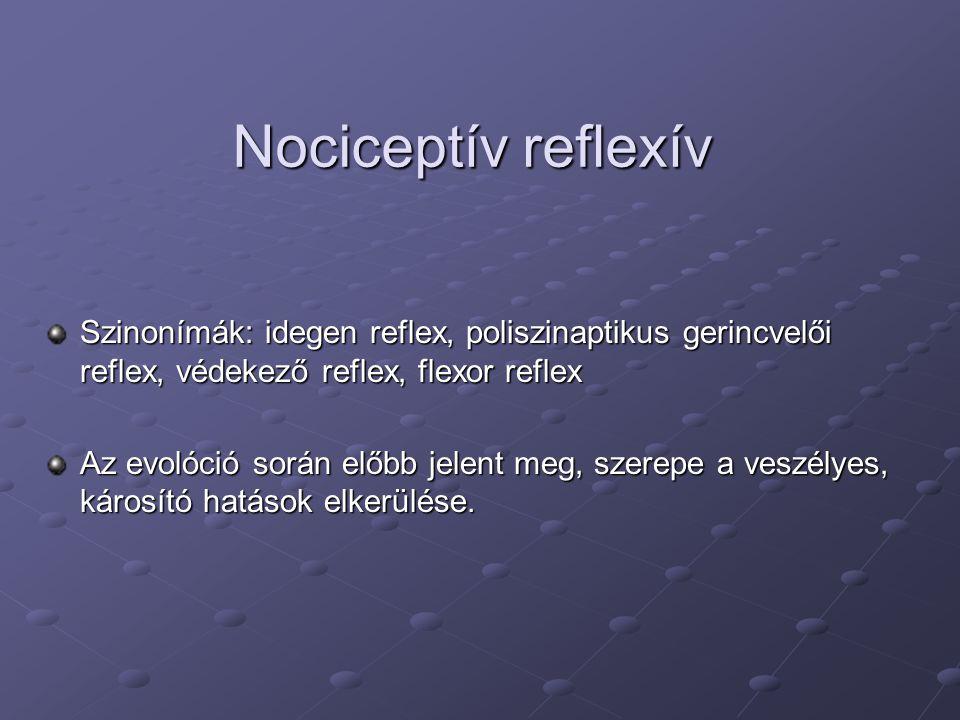 Nociceptív reflexív Szinonímák: idegen reflex, poliszinaptikus gerincvelői reflex, védekező reflex, flexor reflex Az evolóció során előbb jelent meg, szerepe a veszélyes, károsító hatások elkerülése.