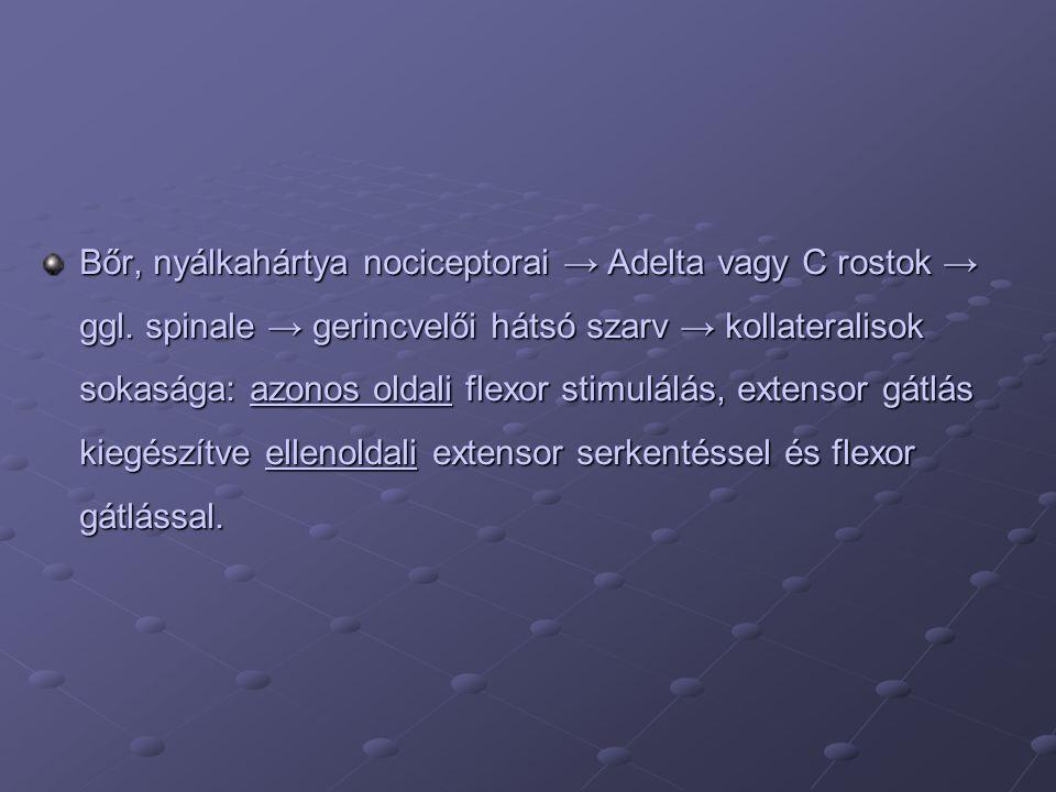 Bőr, nyálkahártya nociceptorai → Adelta vagy C rostok → ggl.