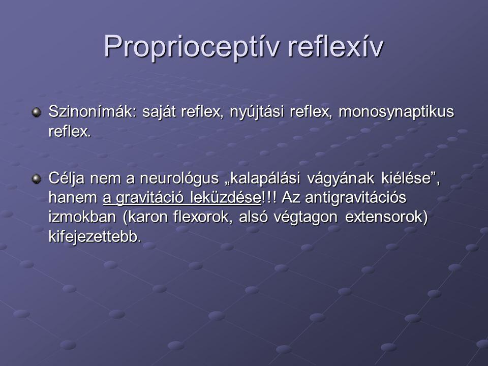 Proprioceptív reflexív Szinonímák: saját reflex, nyújtási reflex, monosynaptikus reflex.
