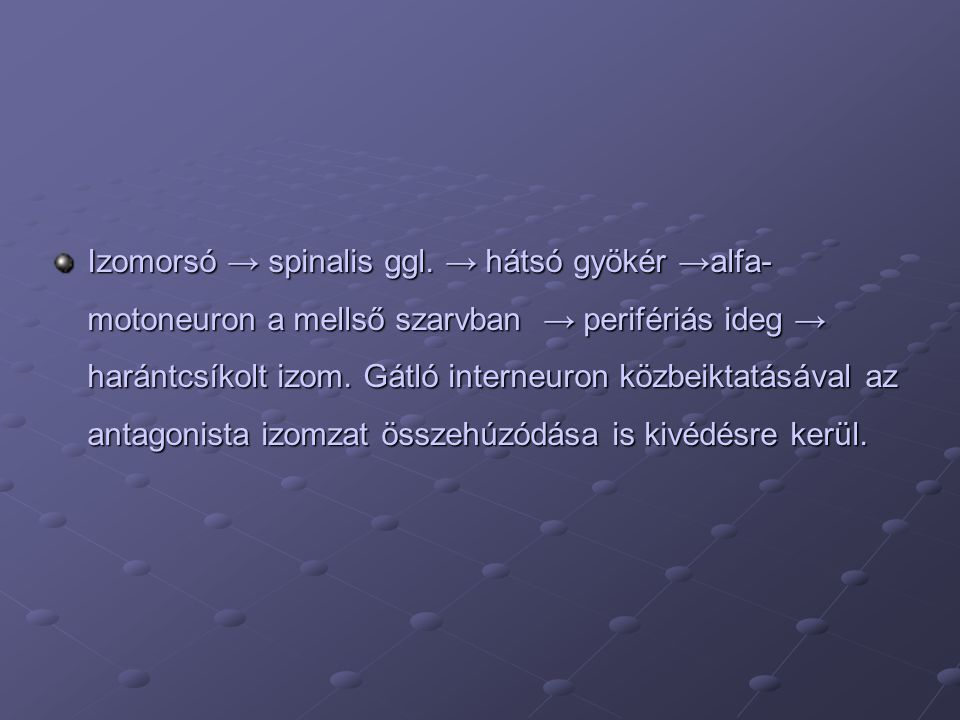 Izomorsó → spinalis ggl.