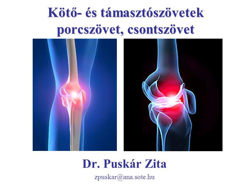 Kötő- és támasztószövetek porcszövet, csontszövet Dr. Puskár Zita zpuskar@ana.sote.hu