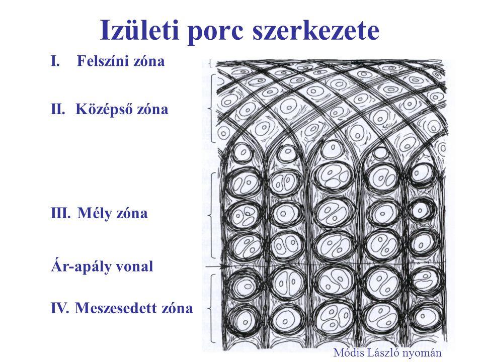 Izületi porc szerkezete I. Felszíni zóna III. Mély zóna II. Középső zóna Ár-apály vonal IV. Meszesedett zóna Módis László nyomán