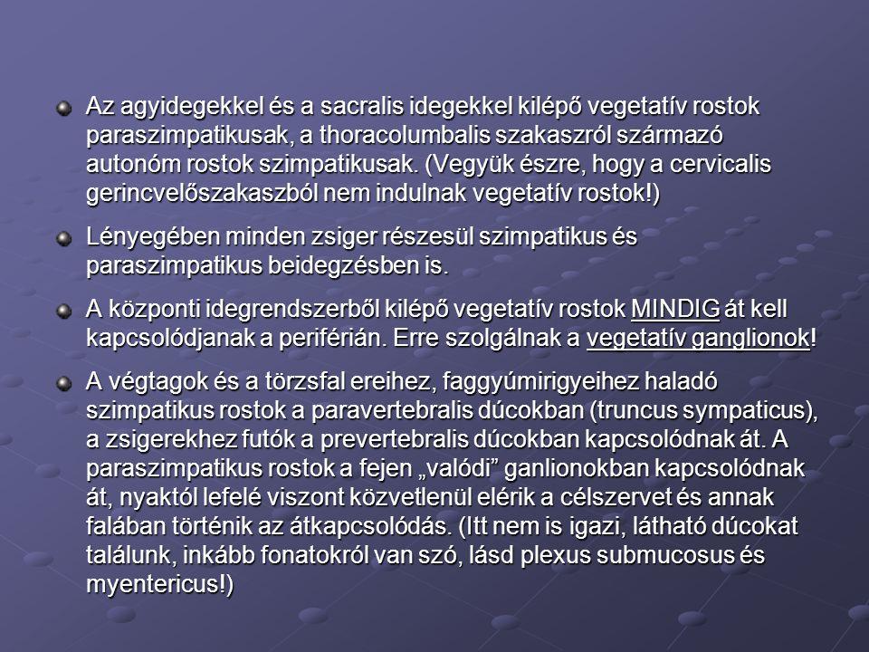 Az agyidegekkel és a sacralis idegekkel kilépő vegetatív rostok paraszimpatikusak, a thoracolumbalis szakaszról származó autonóm rostok szimpatikusak.