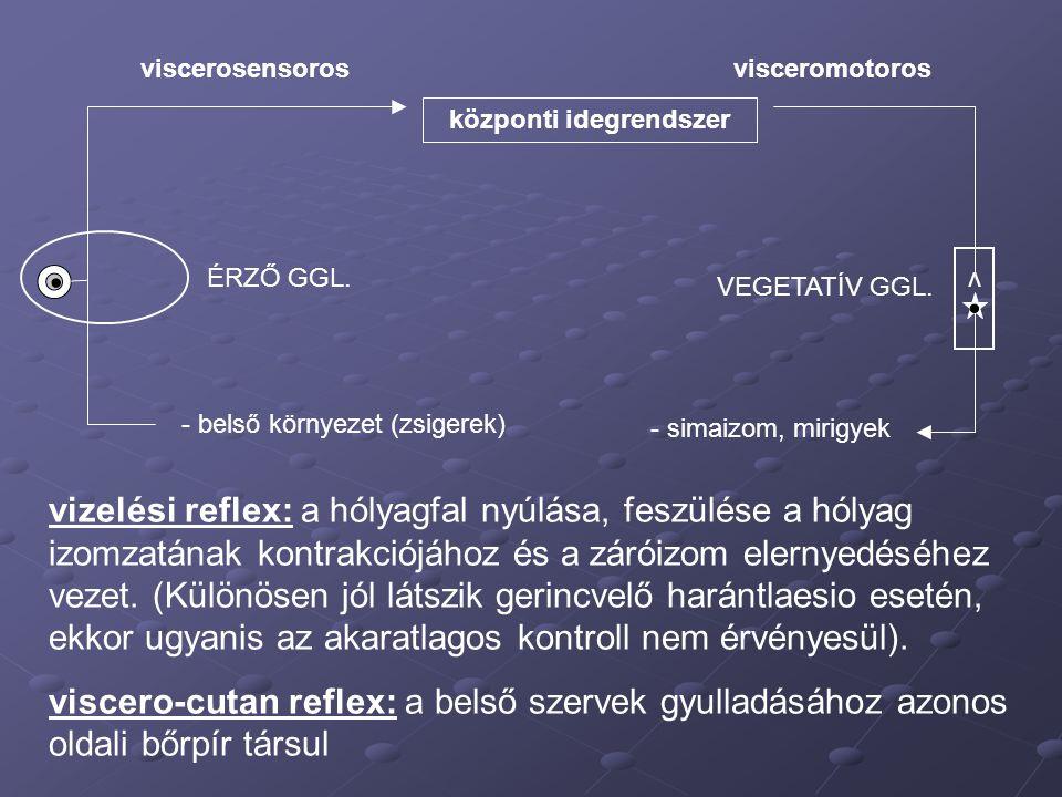 központi idegrendszer visceromotoros - simaizom, mirigyek - belső környezet (zsigerek) viscerosensoros ÉRZŐ GGL. v VEGETATÍV GGL. vizelési reflex: a h