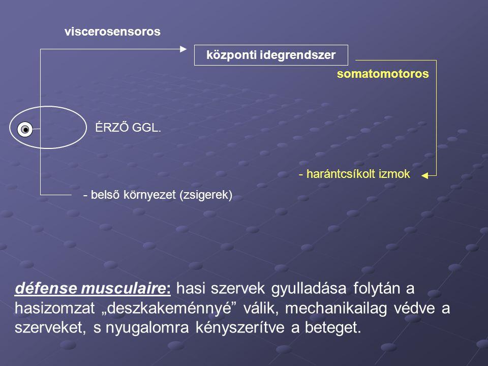 központi idegrendszer - belső környezet (zsigerek) viscerosensoros - harántcsíkolt izmok somatomotoros ÉRZŐ GGL. défense musculaire: hasi szervek gyul