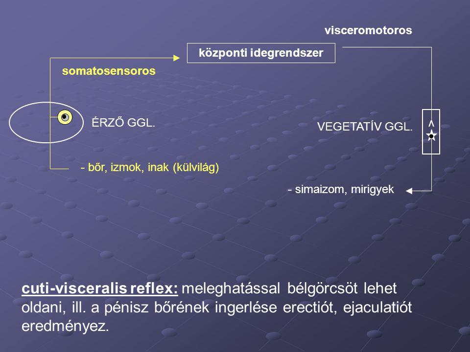 központi idegrendszer - bőr, izmok, inak (külvilág) somatosensoros visceromotoros - simaizom, mirigyek ÉRZŐ GGL. v VEGETATÍV GGL. cuti-visceralis refl