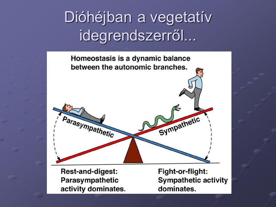 Dióhéjban a vegetatív idegrendszerről...