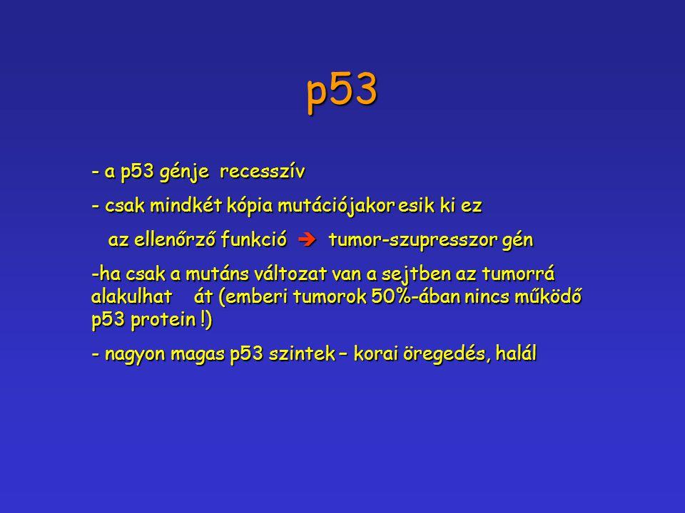 p53 - a p53 génje recesszív - csak mindkét kópia mutációjakor esik ki ez az ellenőrző funkció  tumor-szupresszor gén az ellenőrző funkció  tumor-szu