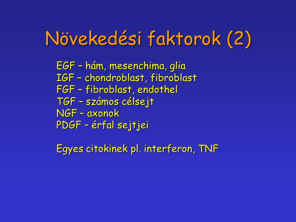Növekedési faktorok (2) EGF – hám, mesenchima, glia IGF – chondroblast, fibroblast FGF – fibroblast, endothel TGF – számos célsejt NGF – axonok PDGF –