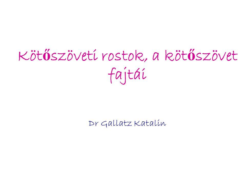 Köt ő szöveti rostok, a köt ő szövet fajtái Dr Gallatz Katalin