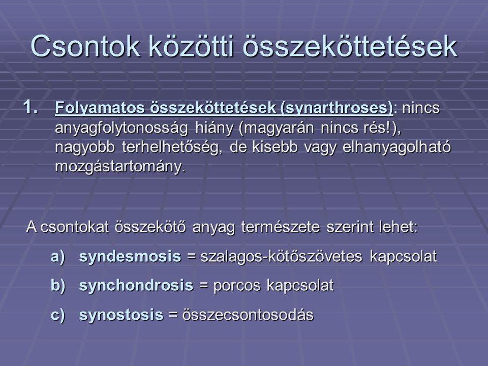 Csontok közötti összeköttetések 1.