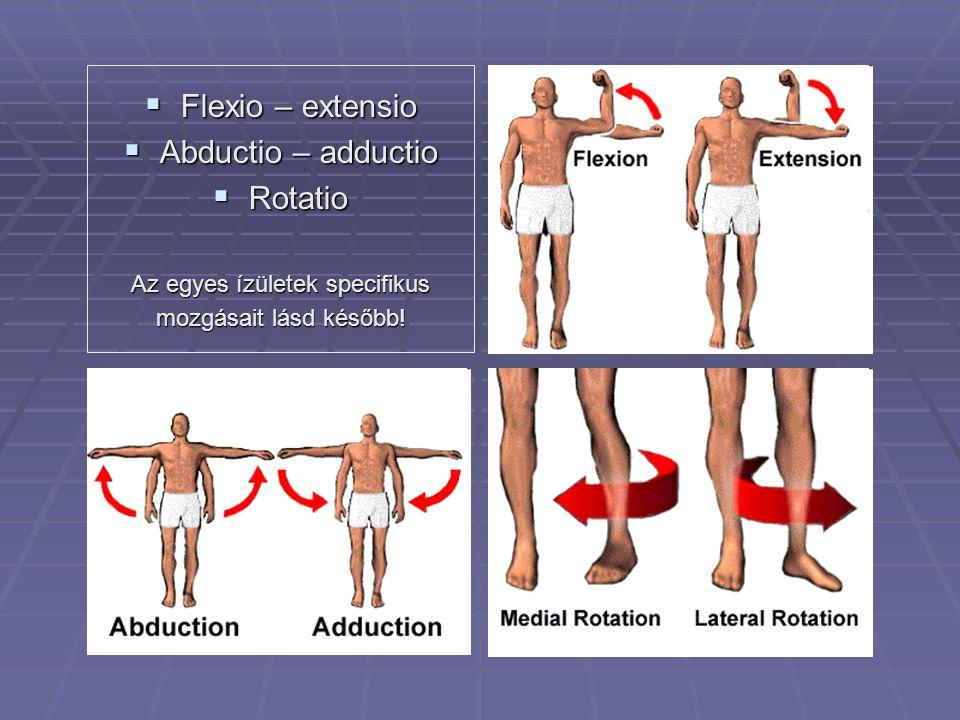  Flexio – extensio  Abductio – adductio  Rotatio Az egyes ízületek specifikus mozgásait lásd később!