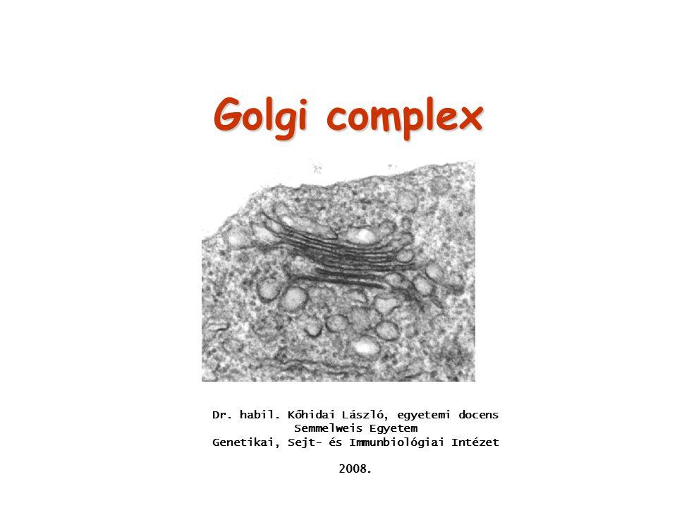 Glikoziláció a Golgi-ban Az N-glikozilációs mintázat módosítása cisz-Golgi: cisz-Golgi: mannóz - típusú oligoszaccharidok komplex oligoszaccharidok TGN: TGN: sziálsavval történő kapcsolás – negatívan töltött O-glikoziláció: főként a mediális- és a transz-Golgi-ban zajlik főként a mediális- és a transz-Golgi-ban zajlik a Ser és Thr oldalláncai glikozilálódnak a Ser és Thr oldalláncai glikozilálódnak