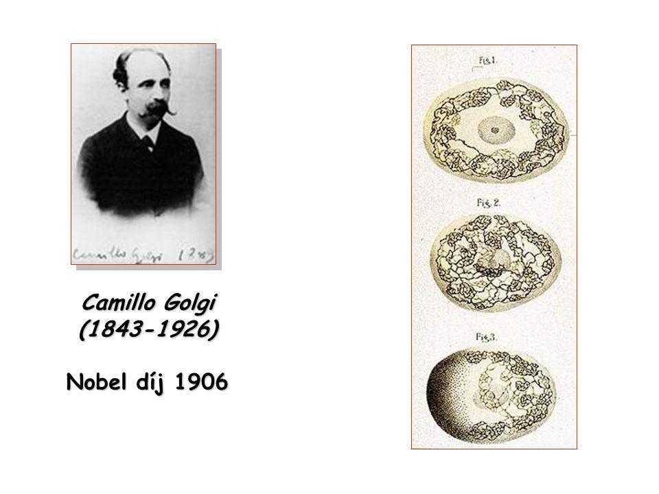 Camillo Golgi (1843-1926) Nobel díj 1906