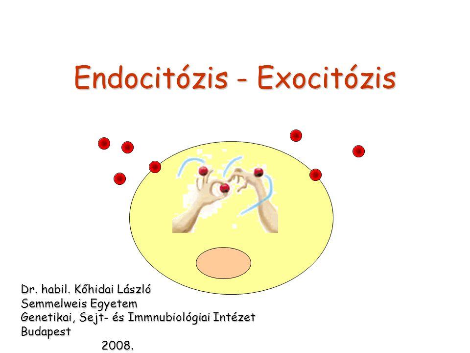 Endocitózis - Exocitózis Dr. habil. Kőhidai László Semmelweis Egyetem Genetikai, Sejt- és Immnubiológiai Intézet Budapest 2008. 2008.