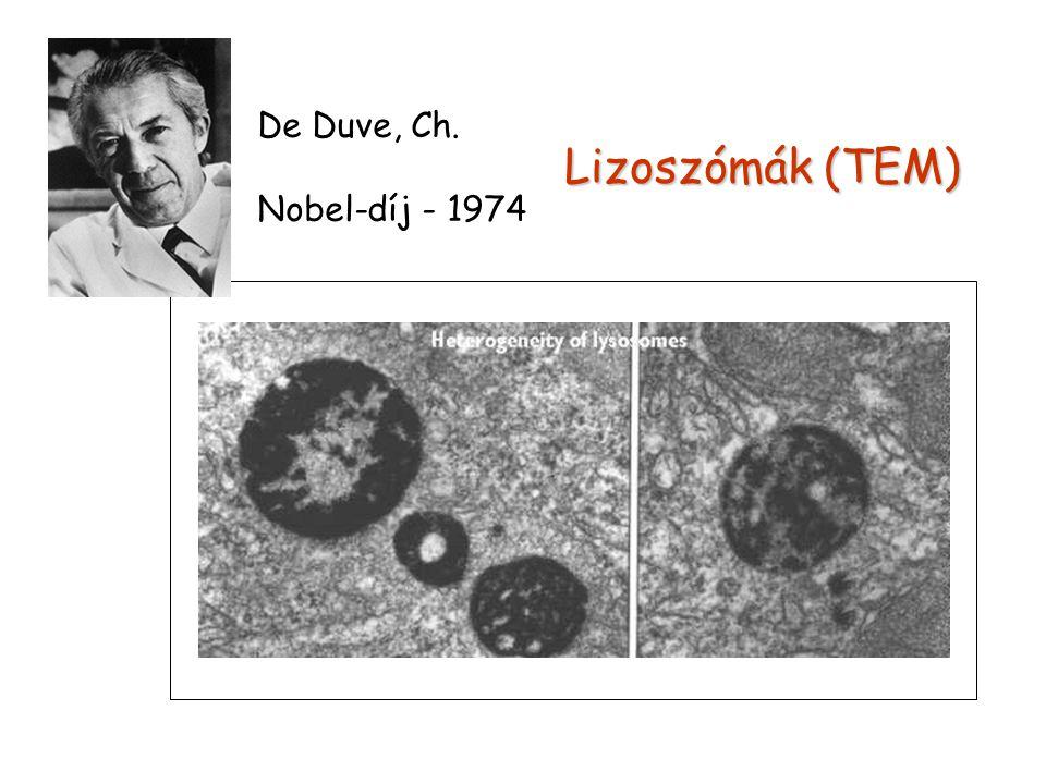 Lizoszómák (TEM) De Duve, Ch. Nobel-díj - 1974