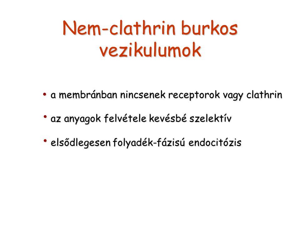 Nem-clathrin burkos vezikulumok a membránban nincsenek receptorok vagy clathrin a membránban nincsenek receptorok vagy clathrin az anyagok felvétele k