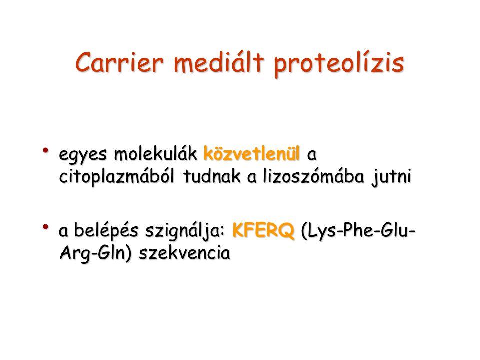 Carrier mediált proteolízis egyes molekulák közvetlenül a citoplazmából tudnak a lizoszómába jutni egyes molekulák közvetlenül a citoplazmából tudnak