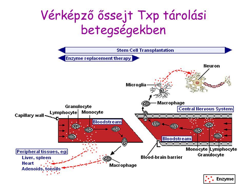 Vérképző őssejt Txp tárolási betegségekben