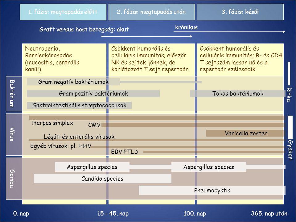 1. fázis: megtapadás előtt2. fázis: megtapadás után3. fázis: késői Graft versus host betegség: akut krónikus Neutropenia, Barrierkárosodás (mucositis,