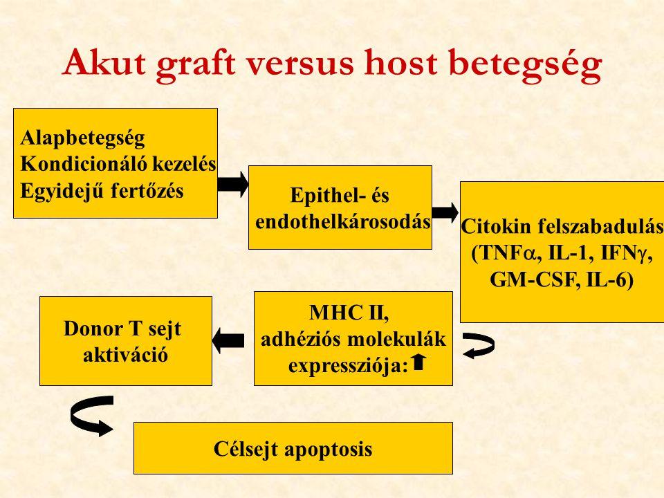 Alapbetegség Kondicionáló kezelés Egyidejű fertőzés Epithel- és endothelkárosodás Citokin felszabadulás (TNF , IL-1, IFN , GM-CSF, IL-6) Akut graft versus host betegség MHC II, adhéziós molekulák expressziója: Donor T sejt aktiváció Célsejt apoptosis