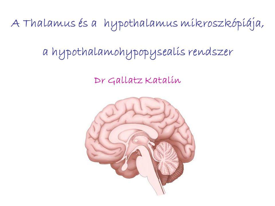A Thalamus és a hypothalamus mikroszkópiája, a hypothalamohypopysealis rendszer Dr Gallatz Katalin