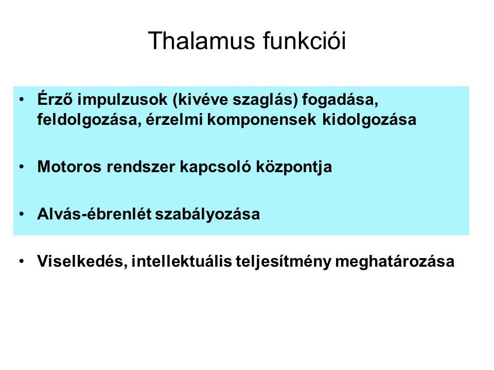 Thalamus funkciói Érző impulzusok (kivéve szaglás) fogadása, feldolgozása, érzelmi komponensek kidolgozása Motoros rendszer kapcsoló központja Alvás-é
