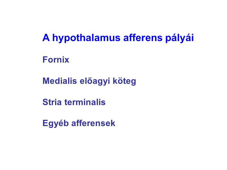 A hypothalamus afferens pályái Fornix Medialis előagyi köteg Stria terminalis Egyéb afferensek