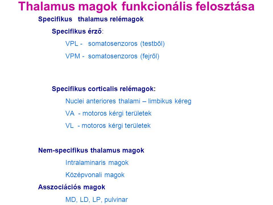 Thalamus magok funkcionális felosztása Specifikus thalamus relémagok Specifikus érző: VPL - somatosenzoros (testből) VPM - somatosenzoros (fejről) Spe