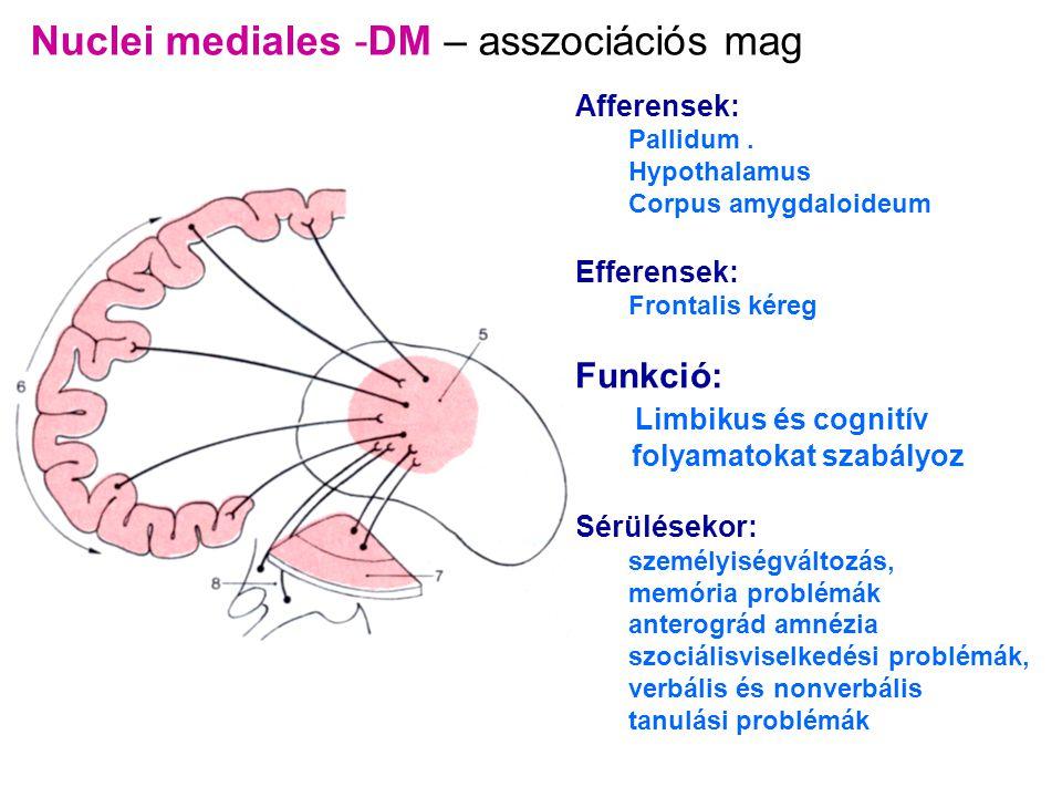 Nuclei mediales -DM – asszociációs mag Afferensek: Pallidum. Hypothalamus Corpus amygdaloideum Efferensek: Frontalis kéreg Funkció: Limbikus és cognit