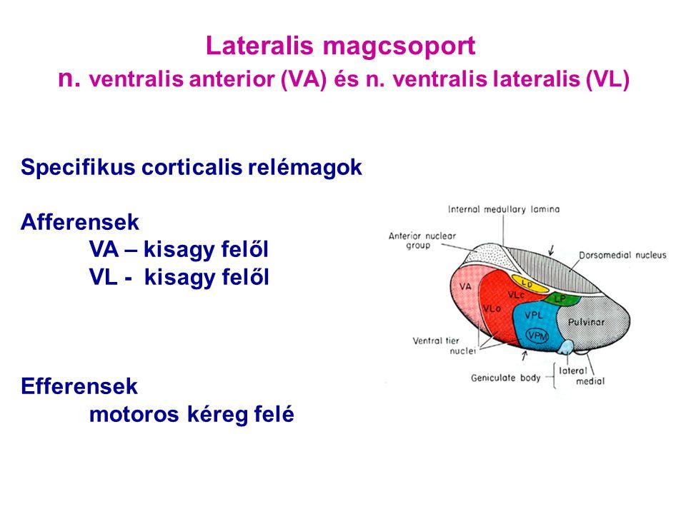 Lateralis magcsoport n. ventralis anterior (VA) és n. ventralis lateralis (VL) Specifikus corticalis relémagok Afferensek VA – kisagy felől VL - kisag
