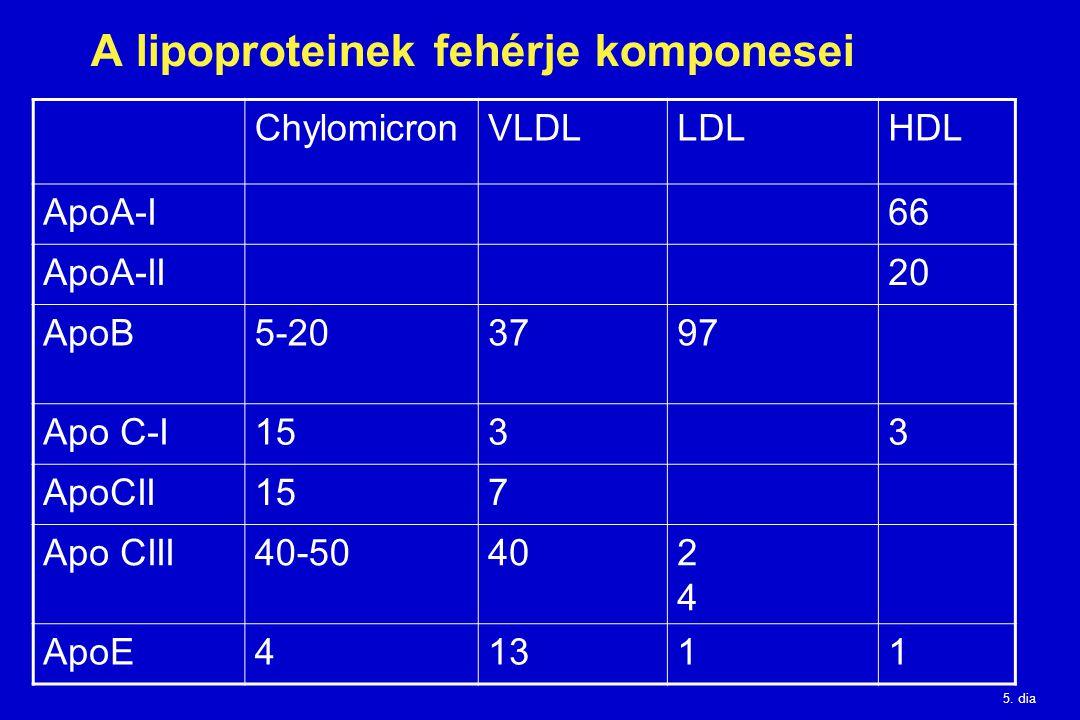 5. dia A lipoproteinek fehérje komponesei ChylomicronVLDLLDLHDL ApoA-I66 ApoA-II20 ApoB5-203797 Apo C-I1533 ApoCII157 Apo CIII40-50402424 ApoE41311