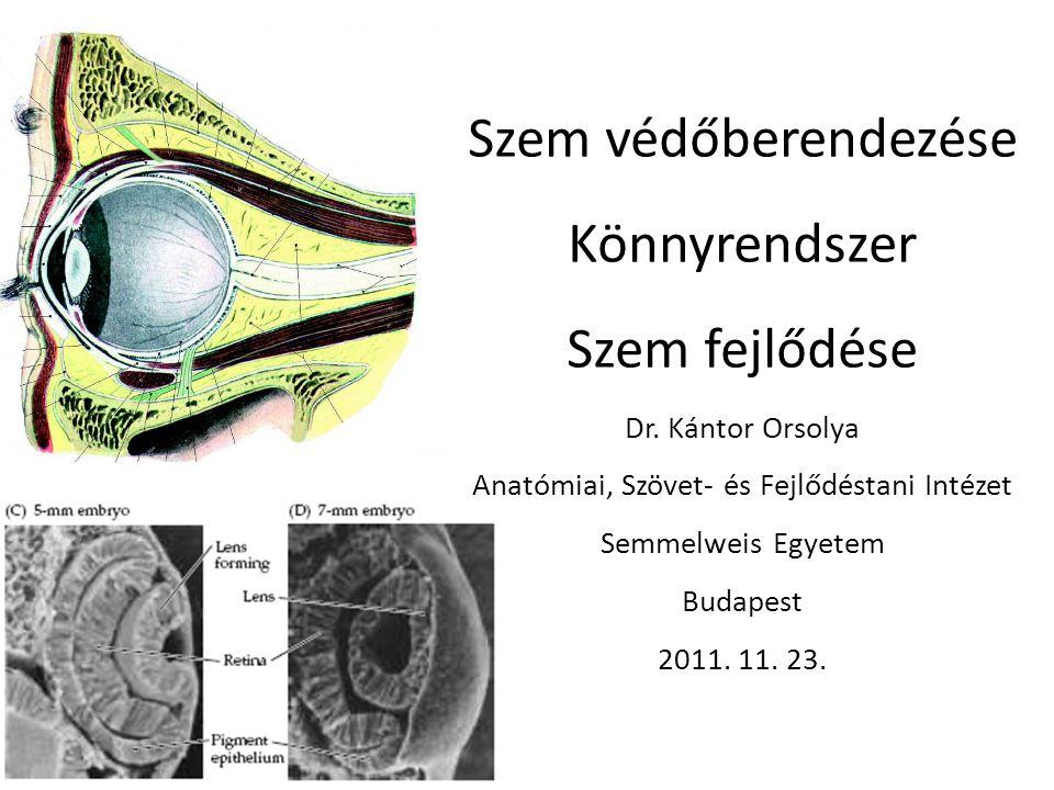 Szem védőberendezése Könnyrendszer Szem fejlődése Dr. Kántor Orsolya Anatómiai, Szövet- és Fejlődéstani Intézet Semmelweis Egyetem Budapest 2011. 11.