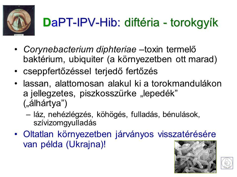 """DaPT-IPV-Hib: diftéria - torokgyík Corynebacterium diphteriae –toxin termelő baktérium, ubiquiter (a környezetben ott marad) cseppfertőzéssel terjedő fertőzés lassan, alattomosan alakul ki a torokmandulákon a jellegzetes, piszkosszürke """"lepedék (""""álhártya ) –láz, nehézlégzés, köhögés, fulladás, bénulások, szívizomgyulladás Oltatlan környezetben járványos visszatérésére van példa (Ukrajna)!"""