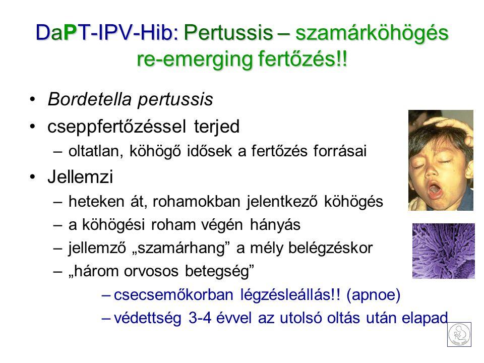 DaPT-IPV-Hib: Pertussis – szamárköhögés re-emerging fertőzés!! Bordetella pertussis cseppfertőzéssel terjed –oltatlan, köhögő idősek a fertőzés forrás