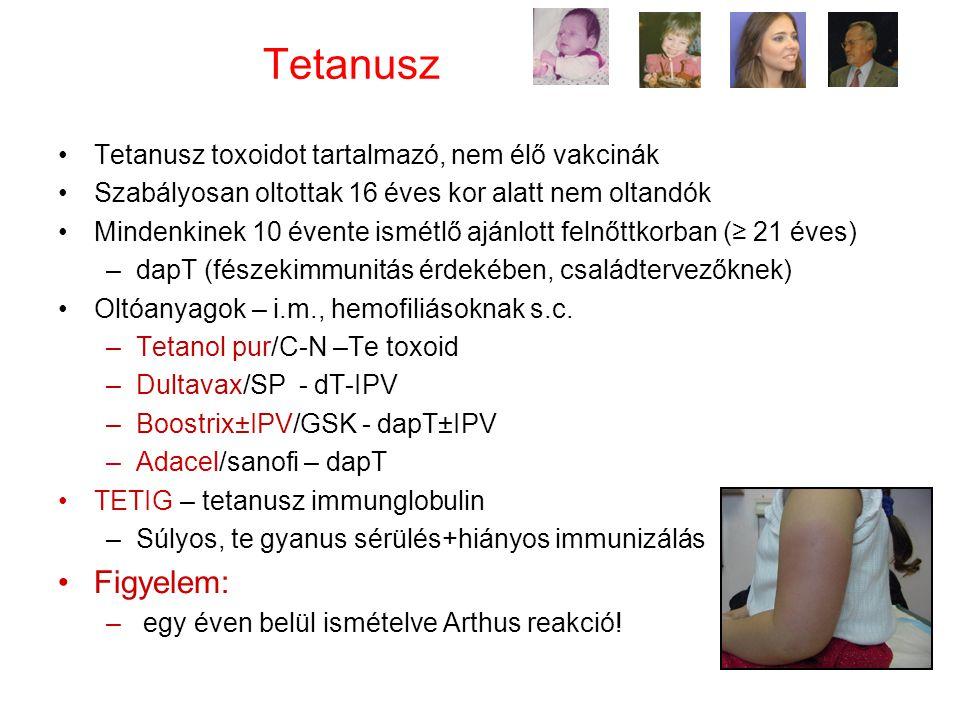 Tetanusz Tetanusz toxoidot tartalmazó, nem élő vakcinák Szabályosan oltottak 16 éves kor alatt nem oltandók Mindenkinek 10 évente ismétlő ajánlott felnőttkorban (≥ 21 éves) –dapT (fészekimmunitás érdekében, családtervezőknek) Oltóanyagok – i.m., hemofiliásoknak s.c.