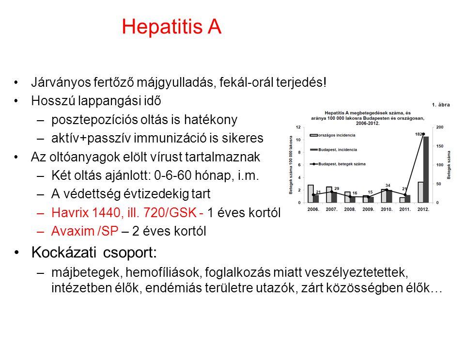 Hepatitis A Járványos fertőző májgyulladás, fekál-orál terjedés! Hosszú lappangási idő –posztepozíciós oltás is hatékony –aktív+passzív immunizáció is